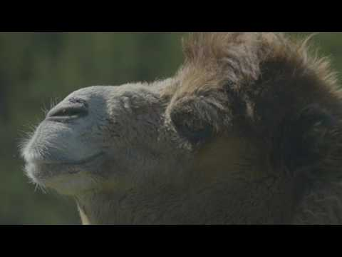 Thumbnail: Camel - Educational Adventures