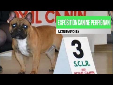 centrale canine perpignan