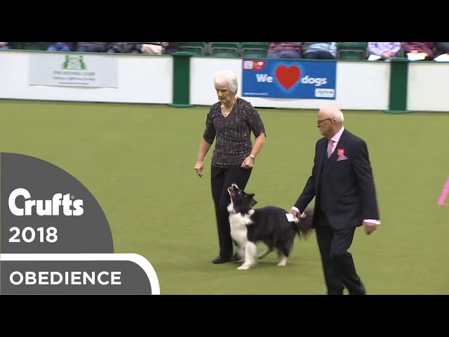 Obedience - Bitch Championship - Part 15 | Crufts 2018
