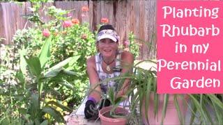 Planting Rhubarb in my Perennial Garden