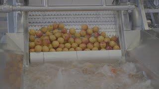Sraml Fruit Bubble Washer