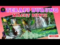 Terapi Burung Macet Bunyi  Mp3 - Mp4 Download