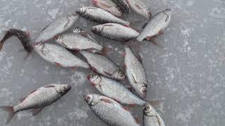 Зимняя рыбалка Ю.Буг