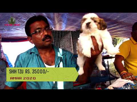 CUTE DOG PUPPY SELLER AT GALIFF STREET PET MARKET KOLKATA | 20TH JAN 2019 | SELLER CONTACT NO.