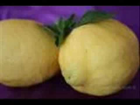 Bunga Cinta Nista - Lemon-T