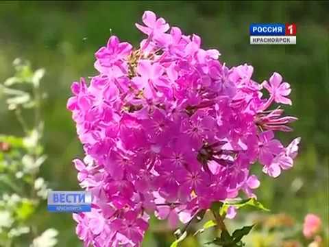 Выставка цветов в красноярске