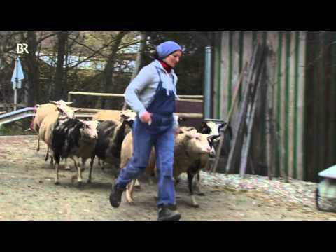Kößlarn Bauernmarkt