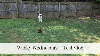 Wacky Wednesday Test Vlog