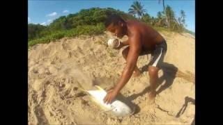 Pesca de Praia (Xaréus)