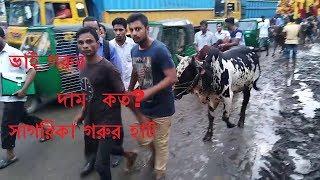 Gambar cover Bhai Gorur Dam Koto?ভাই গরুর দাম কত?Sagorika Gorur haat 2018।সাগরিকা গরুর হাট ২০১৮।