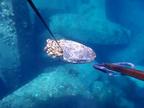 Spearfishing 17 Lbs Cuttlefish