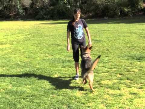 Obedience in Hollywood, Ca Dog Park with Actress Nikki Reed and Husband Paul McDonald With Dog Purchased From Professional Dog Training Services