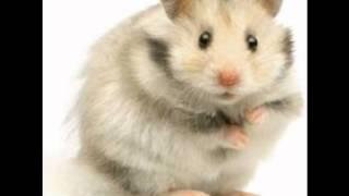 Lafesse blague téléphonique : join de hamster