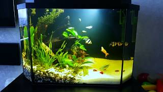 Бесшумная аэрация аквариума!!!