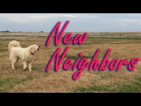 New Neighbors! - Will the Livestock Guardian Dogs Approve?