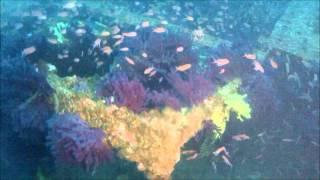 Plongée sur Le Grec le 1er mai 2012 depuis Les Heures Bleues