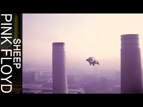 Pink Floyd - Sheep Thumbnail image
