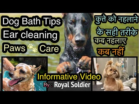 Doberman Dog Bath, Ears cleaning, Paws 🐾. Care, Precautions after and before bath of a pet. Hindi