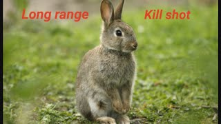 Hunting Rabbit with a Slingshot/Catapult