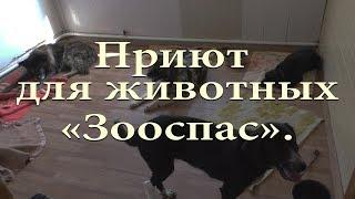 """Приют для животных """"ЗООСПАС""""."""