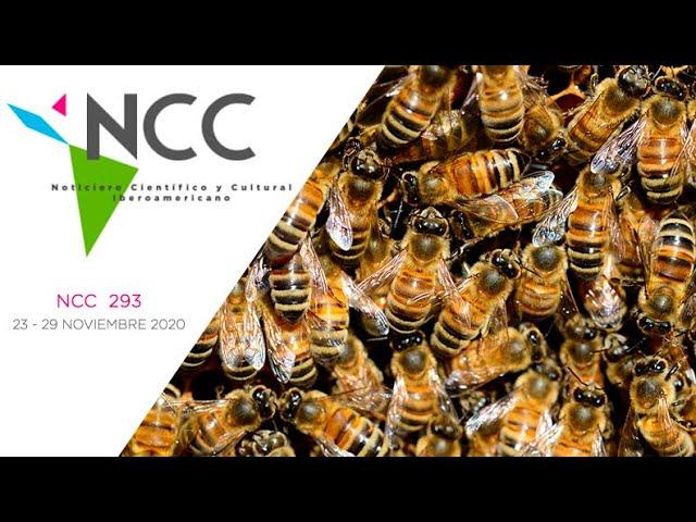 Noticiero Científico y Cultural Iberoamericano, emisión 293. 23 al 29 de Noviembre 2020
