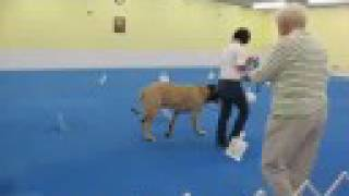 This Video Previously Contained A Copyrighted Audio Track. Due To A Claim By A Copyright Holder, The Audio Track Has Been Muted.     York County Dog Training Club