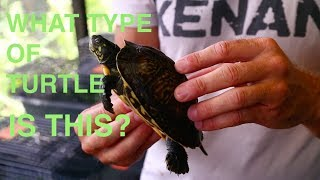 Kamp Kenan Army Challenge, What is this Turtle?