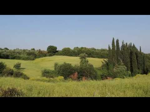 Nature Sounds |  Greece Countryside Birdong