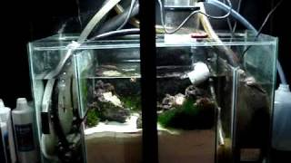 Diy Sump Refugium Setup Part 1 Of 4