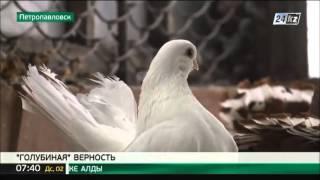 Житель Петропавловска разводит породистых голубей