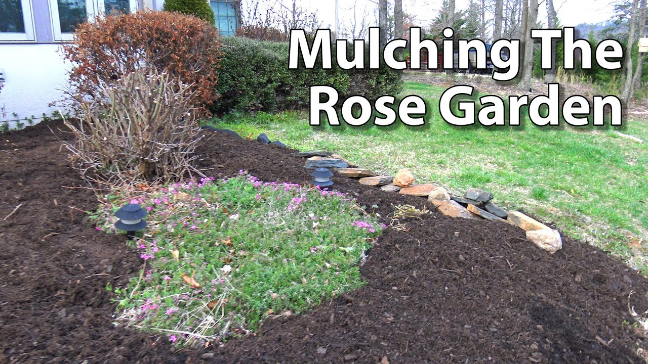Killing weeds in flower beds - Mulching Rose Beds Preen Weed Control Fabric