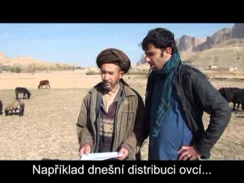 Distribuce ovcí v afghánském Balchu
