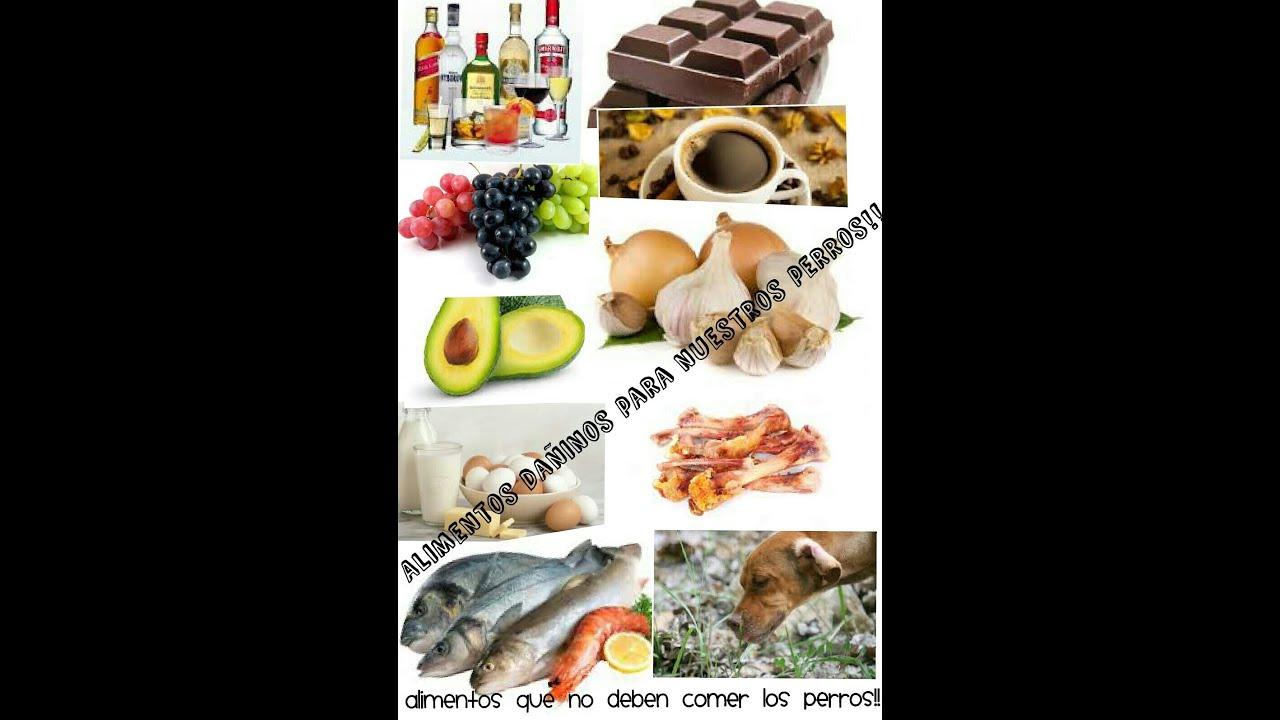 Ranking de 10 alimentos que no deben comer nuestros perros youtube - Alimentos recomendados para perros ...