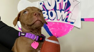 PUPPY BOWL | Robby and Penny
