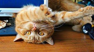 Смешные кошки ИЮЛЬ 2019. Новые приколы с котами, смешные коты приколы 2019 funny cats animals #88