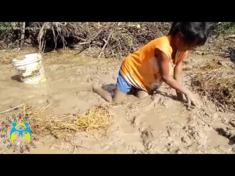 poor children fishing at rice farm (hungry children in africa)