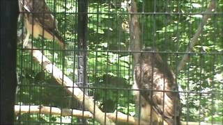 Turtle Back Zoo Trip June 2012 Part 3