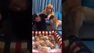 Мама щенков защищает их