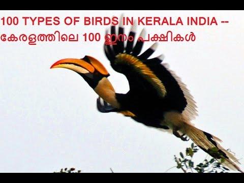 100 Birds Of Kerala ക രളത ത ല 100 ഇന പക ഷ കൾ Youtube