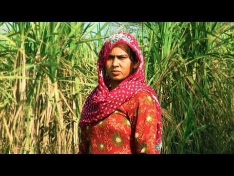Sugar Cane Farm Hisar