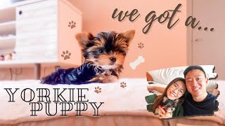 picking up YORKIE PUPPY | first day home | new puppy parent what to expect |  The R&D Couple