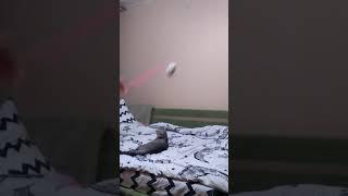Я играю с котом