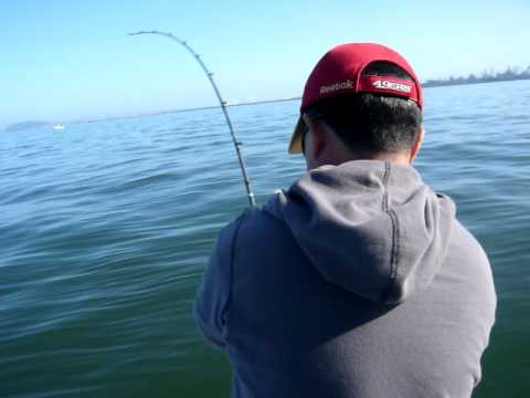 Charles Tony Striped Bass Fishing In Sf Bay Area Youtube