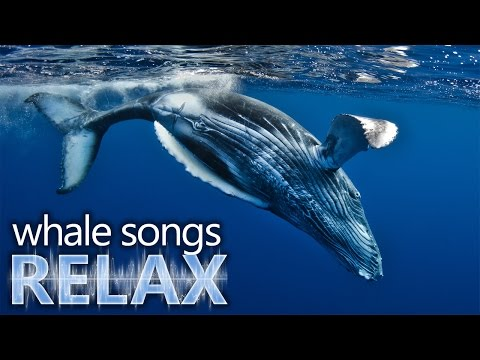 Humpback Whale songs of the ocean deep sleep music relaxation-holistic hypno