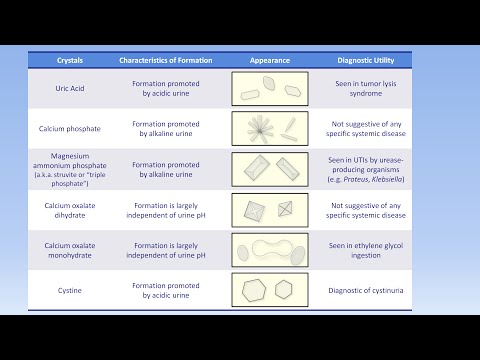 Interpretation of the Urinalysis (Part 3) - Microscopy and Summary