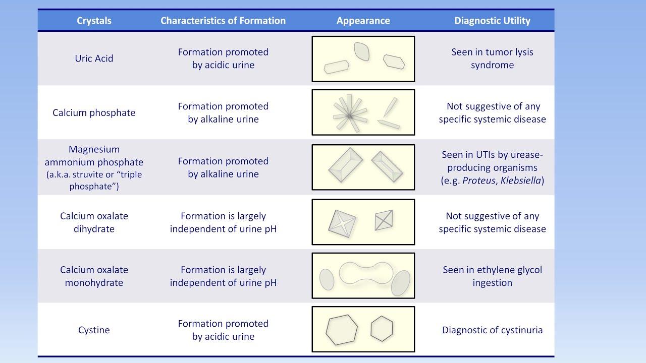 Interpretation of the Urinalysis (Part 3) - Microscopy and Summary ...