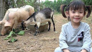 Bé Chơi Với Các Con Vật – Con Lợn Và Con Dê ❤ AnAn ToysReview TV ❤