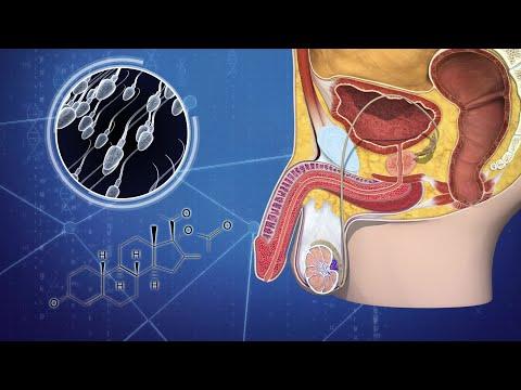 male-birth-control-gel-set-to-begin-human-trials