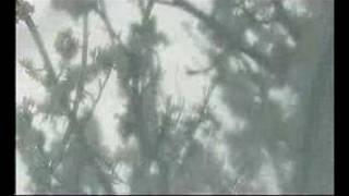 Арт-видео