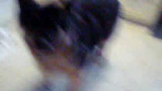 camrea pics1 049.mpg Thumbnail